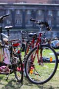 Bicycle rentals at HOLI